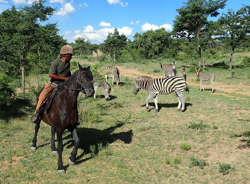 Safari à cheval en Afrique du Sud